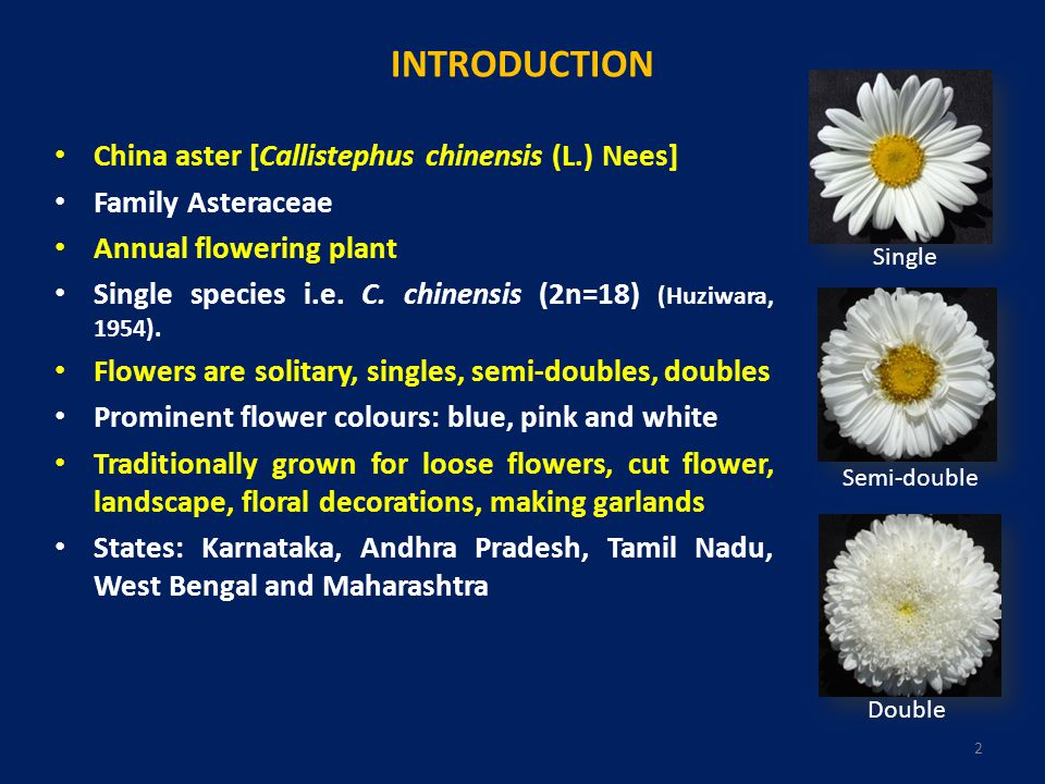 INTRODUCTION China aster [Callistephus chinensis (L.) Nees]